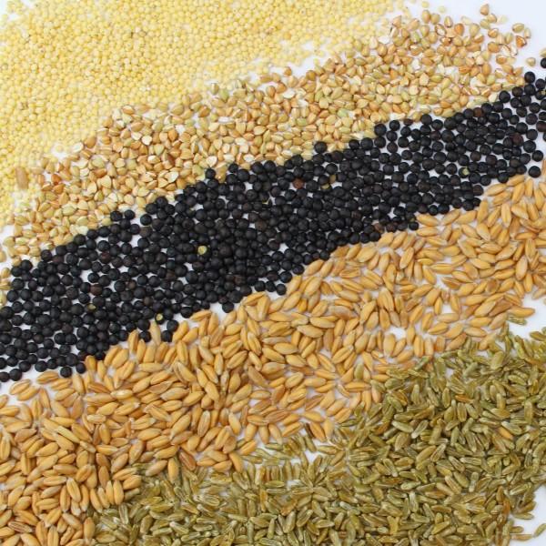 Knaufs Probierpaket für Gerichte ohne Getreidemühle