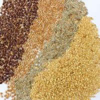 Knaufs Probierpaket Getreidesprossen & Gerstengras